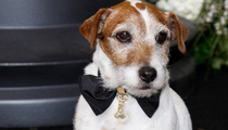 Uggie the Dog Dies -- 'The Artist' Star Put to Sleep After Prostate Illness