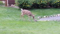 Super Cute -- Real-Life Bambi & Thumper (VIDEO)