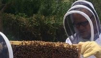 Flea – I've Got Bees … 200,000 of Them!!!