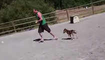 Cute Alert -- Baby Miniature Horse Chases Guy