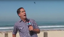 Reporter Freaked By Bug -- Are We Live?!?!? (VIDEO)