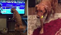 Dog Loves Tennis -- Goes Nuts Watching Serena Vs Venus (VIDEO)