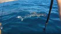 Kayaker Gets Chased To Shore After Fighting Off Hammerhead Shark