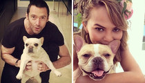 Famous Frenchie Lovers -- See The Dog-Gone Cute Pics