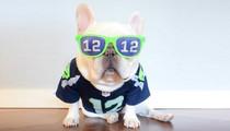 NFL's Furriest Fan -- All In for the Seattle Seahawks