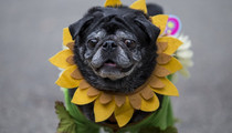 17 Dressed Up Dogs -- See the Halloween Pup Parade