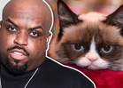 TMZ's Famous Felines -- Celebrate #NationalCat Day! (VIDEO)