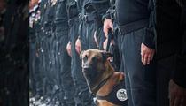Paris Terror Attacks -- Diesel The Police Dog Killed During Raid