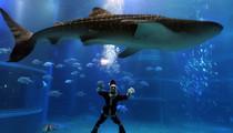 Santa Under The Sea - See Saint Nic Take a Dive