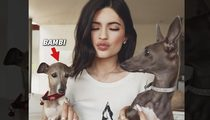 Kylie Jenner -- Animal Control Investigates for Dog Neglect