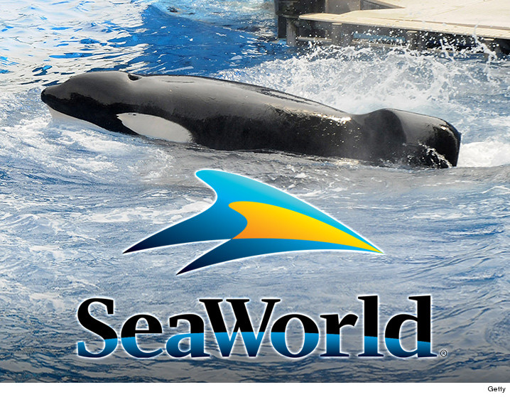 0308-tilikum-whale-seaworld-GETTY-01