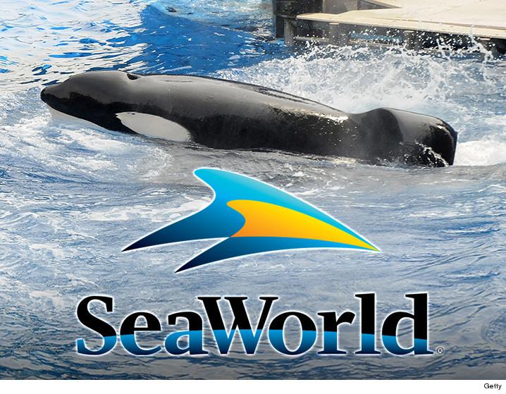 0308-tilikum-whale-seaworld-GETTY-01