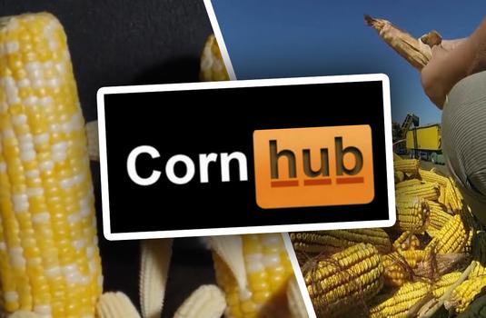 Free quallity porn hub