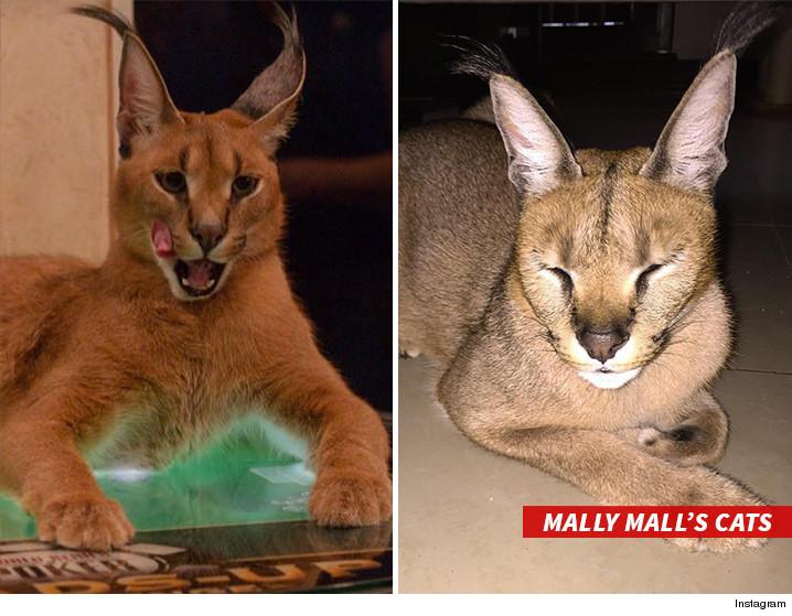 0526-sub-mally-mall-cats-instagram