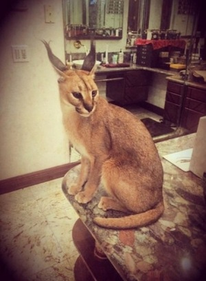 Remembering Mally Mall's Caracal, Nyla