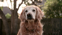 Last Known 9/11 Rescue Dog Dies
