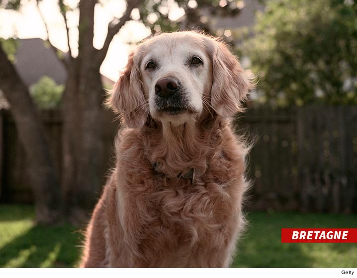 0607-911-dog-Bretagne-getty-02