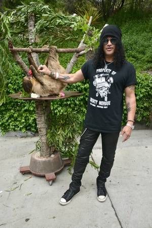 Slash Hangin' With A Sloth