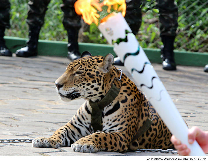 0621_jaguar-at-olympics_JAIR-ARAUJODIARIO-DO-AMAZONASAFP
