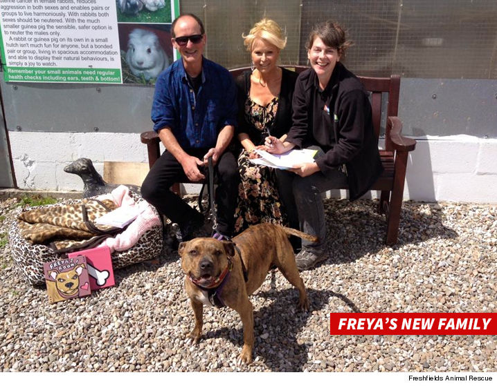 0705-michael-bay-freya-dog-SUB-Freshfields-Animal-Rescue-01