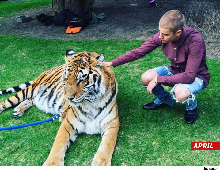 0721_justin_bieber_tiger_april_instagram