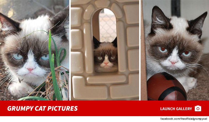 1001-grumpy-cat-sub-gallery-getty-01