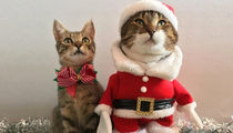 Instagram's Christmas-Lovin' Cats ... See The Festive Felines