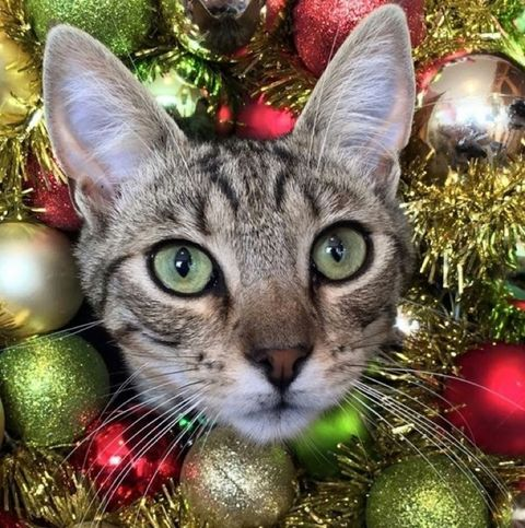 Instagram's Purrfect Christmas Cats -- Meow!
