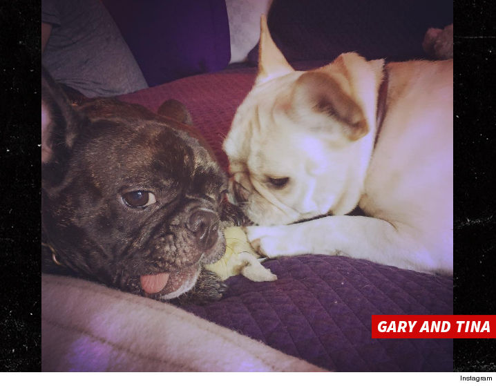 1227-billy-lourde-carry-fisher-dogs-gary-and-tina-INSTAGRAM-01