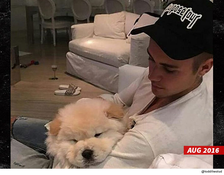0104_justin_bieber_todd_the_dog_instagram-swipe
