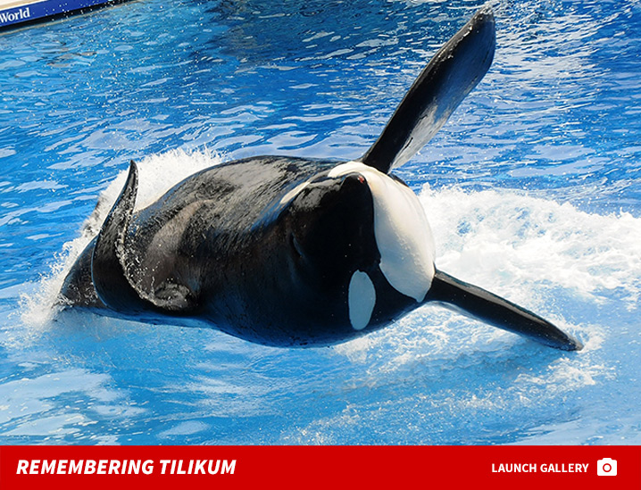 0106-tilikum-remembering-photos-launch