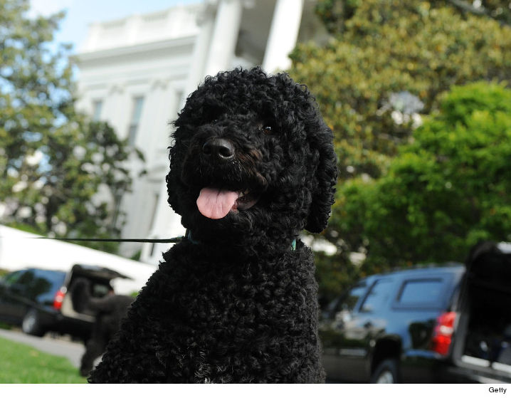 What Is The Name Of Obamas Dog