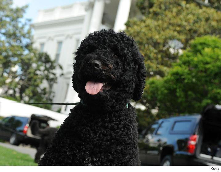 0112-obama-dog-sunny-getty