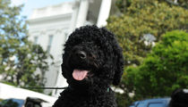 Obama Dog Sunny Has Bite, But NO History Of Aggression