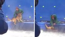 'A Dog's Purpose' Video Triggers Suspension