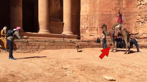 Detroit Lions Player LONGSNAPPIN' In Ancient City ... With a Camel