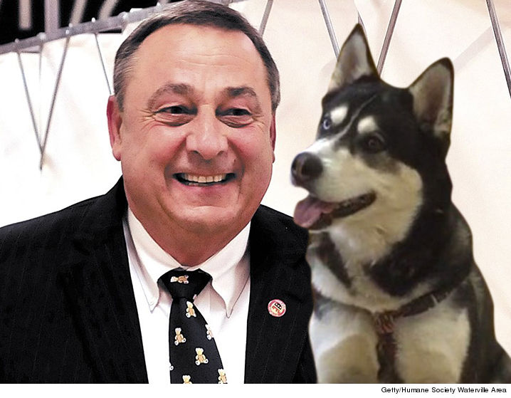 0330-paul-lepage-husky-dog-getty-Humane-Society-Waterville-Area