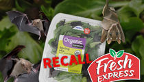Dead Bat Inside Walmart Salad Forces Recall