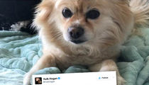 Brooke Hogan's Desperately Trying to Find Lost Dog with Hulk's Help (PHOTO)