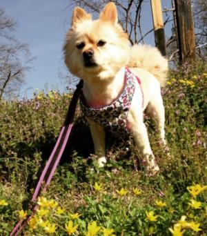 Brooke Hogan's Dog Molly -- MISSING!