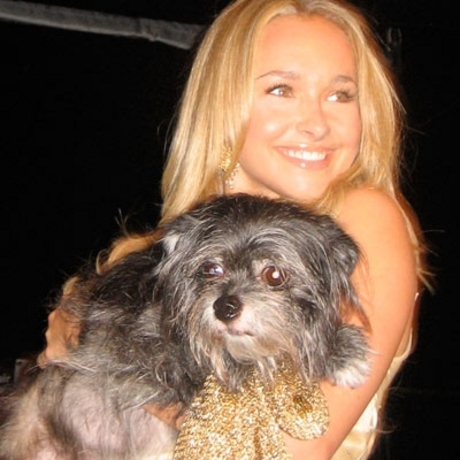 Celebs Love Their Dogs