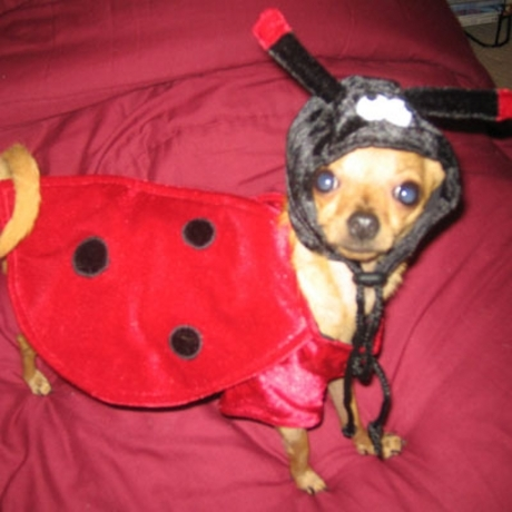 Doggie Dress Up Contest