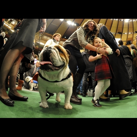 2011 Westminster Kennel Club Dog Show at Madison Square Garden Photo Gallery